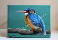 IJsvogel vrouwtje Schoonmoeder, 24x18 cm. Niet te koop.