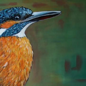 Detail IJsvogel Vrouwtje