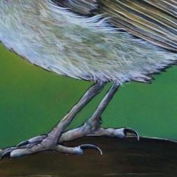 Detail Roodborst op tak