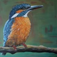 IJsvogel Vrouwtje, 60x60 cm,, niet te koop
