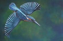 Vliegende IJsvogel, op bestelling verkrijgbaar in de gewenste maten